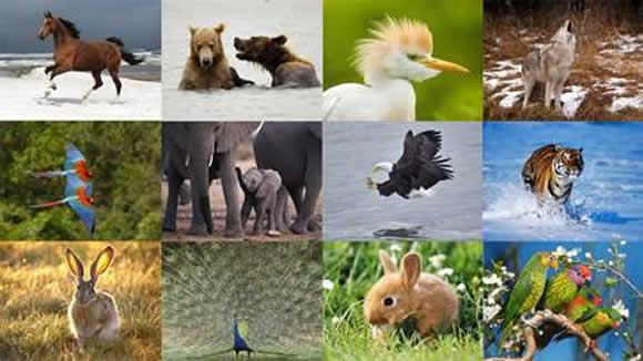 Bölgeye Göre Hayvanlar Kaça Ayrılır?